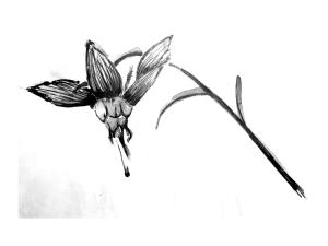 fleur oiso